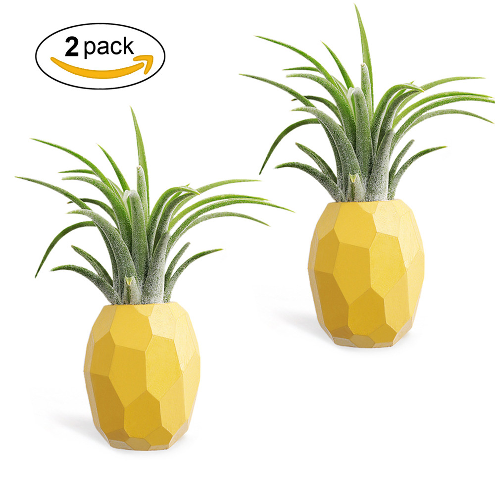 Aieve Air Plant Holder,Hanging Air Plant Holders,2 Pack Pineapple Geometric Air Plant Holder Container with Magnet for Hanging Air Plants Small Tillandsia Indoor Wall Home Décor